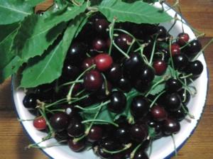 ciliegie di villacidro2